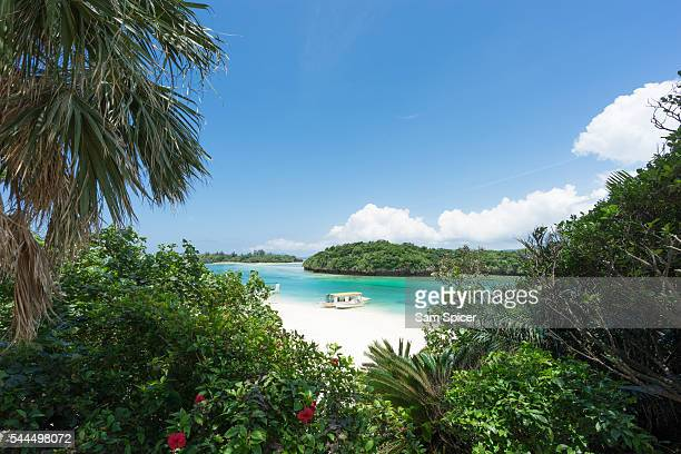Tropical lagoon beach with clear blue water and white sand surrounded by lush greenery and flowers