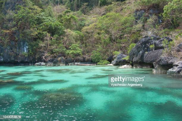 tropical lagoon, crystal clear water, pure tropical bliss, palawan, philippines - argenberg fotografías e imágenes de stock