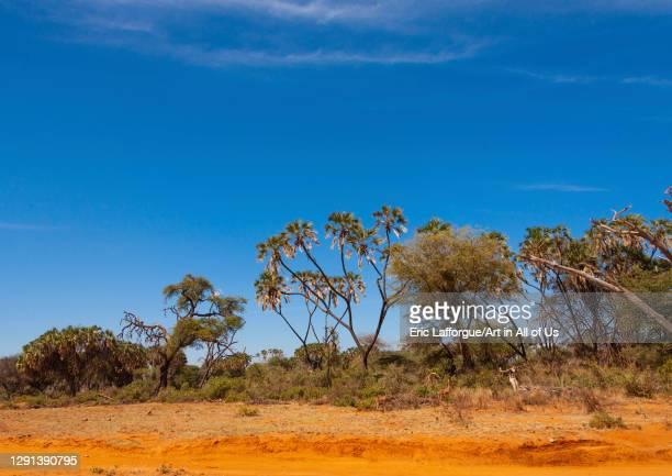 Tropical landscape, Samburu County, Samburu national reserve, Kenya on July 12, 2009 in Samburu National Reserve, Kenya.