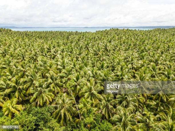 tropical landscape with palm tree forest and ocean in the background - west sumatra province stock pictures, royalty-free photos & images