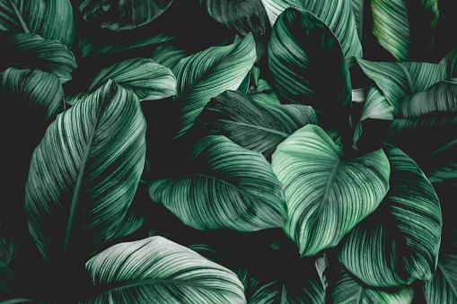 Tropical leaf background 1147081863