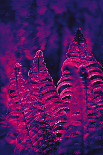 Tropical leaf forest glow in the dark background. High contrast - gettyimageskorea
