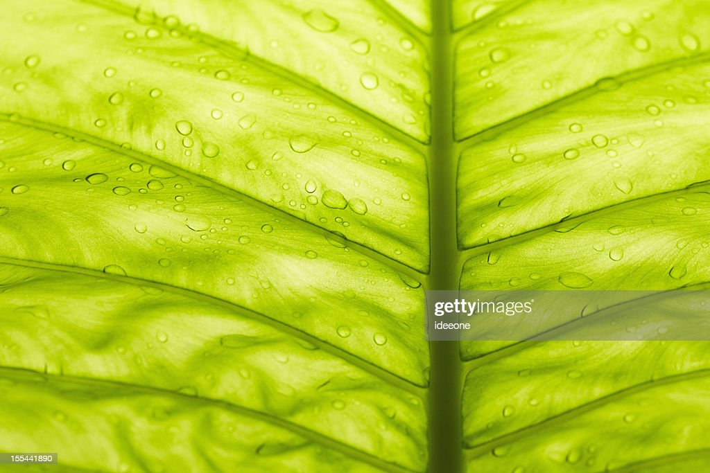 tropical leave : Stock Photo