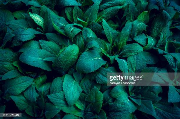 tropical leaves colorful flower on dark tropical foliage nature background dark green foliage nature - lush stock pictures, royalty-free photos & images