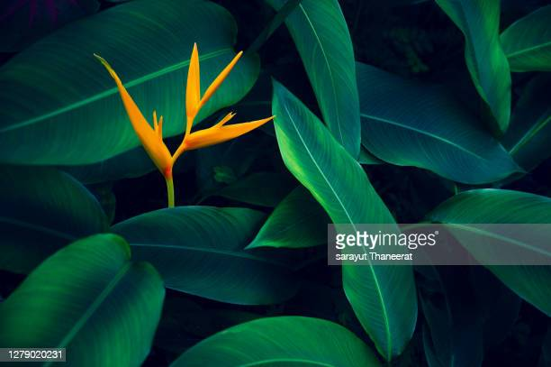 tropical leaves colorful flower on dark tropical foliage nature background dark green foliage nature - bright colour stock pictures, royalty-free photos & images
