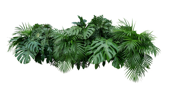 Tropical leaves foliage plant bush floral arrangement nature backdrop isolated on white background, clipping path included. 941440318