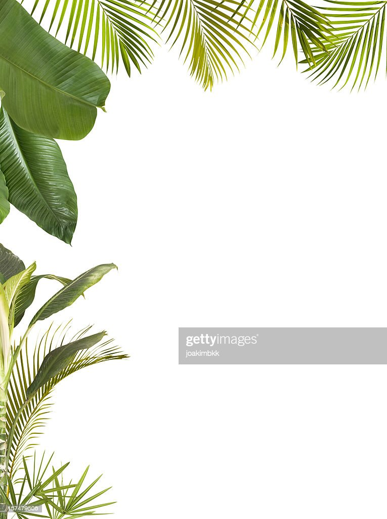 Tropical leaves frame isolated on white with copy space : Stock Photo