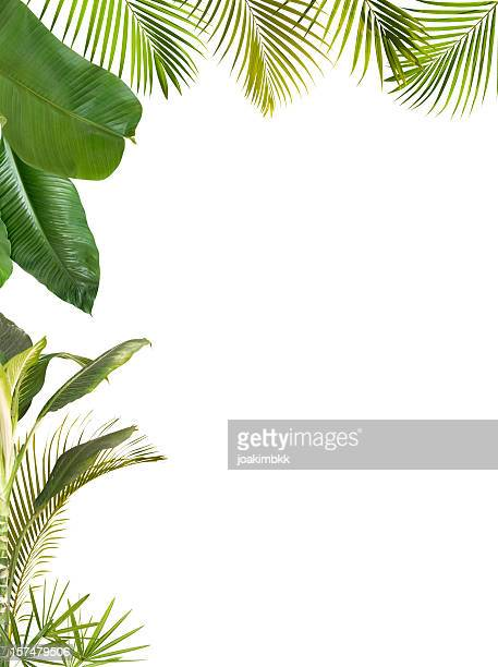 tropical leaves frame isolated on white with copy space - tropical bush stock pictures, royalty-free photos & images