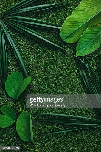 Tropical Leaves Green Background Green Leaves Pattern Frame Natural Green Pattern Palm Leaves On Green Grass High Res Stock Photo Getty Images Tropical jungle leaves portrait by rené jordaan photography on @creativemarket. https www gettyimages com detail photo tropical leaves green background green leaves royalty free image 680513670