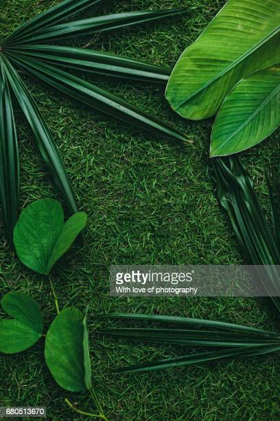 Tropical leaves green background, green leaves pattern frame, natural green pattern, palm leaves on green grass