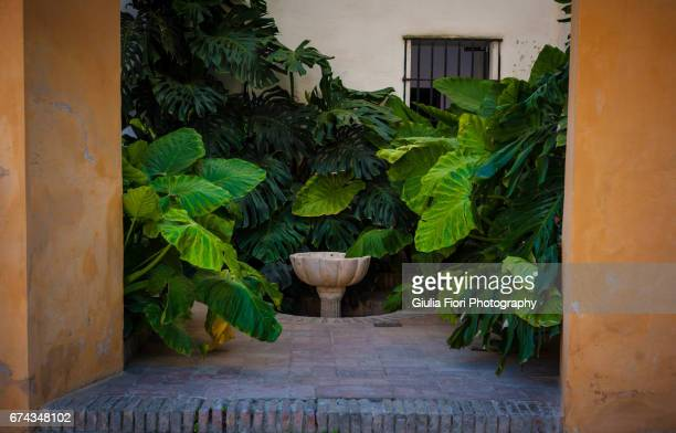 Tropical leaves in a small courtyard