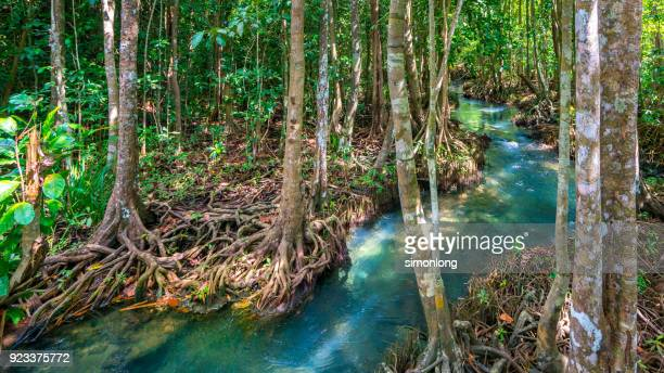 a tropical mangrove forest with clear natural pool - dramatic landscape stock pictures, royalty-free photos & images