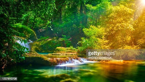 tropical nature. sun. waterfall. stream. - 湧水 ストックフォトと画像