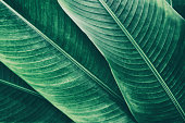 https://www.istockphoto.com/photo/tropical-palm-leaf-texture-backgrounds-gm873969272-244051002