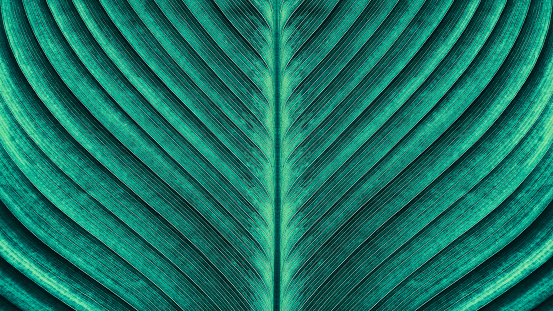 tropical palm leaf texture 903532536