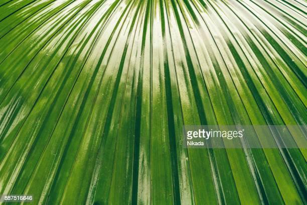 Tropischen Palmblätter Detail, Brasilien