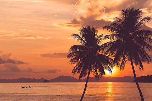 tropical palm tree at sea and sunset summer background 932811716
