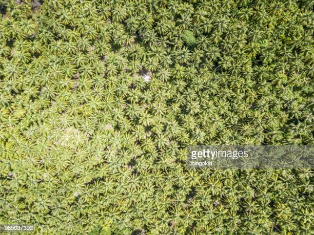 tropical palm tree forest from directly above - palm branch stock pictures, royalty-free photos & images
