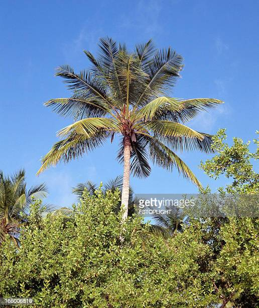 tropical palm tree - fstoplight stock photos and pictures