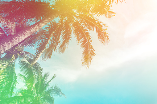 Tropical palm tree with colorful bokeh sun light on sunset sky cloud abstract background. Summer vacation and nature travel adventure concept. Vintage tone filter effect color style. 1143925397
