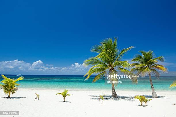 tropical palm trees on beach - honduras stock pictures, royalty-free photos & images