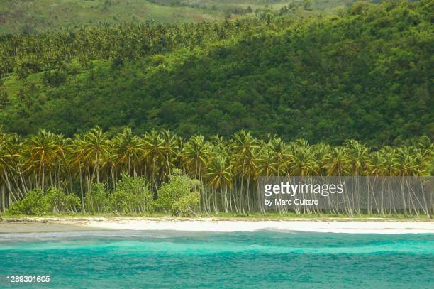 tropical paradise at playa rincon, samana, dominican republic - paisajes de republica dominicana fotografías e imágenes de stock