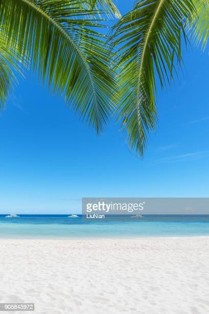 tropical paradise beach and palm leaf - idyllic stock pictures, royalty-free photos & images