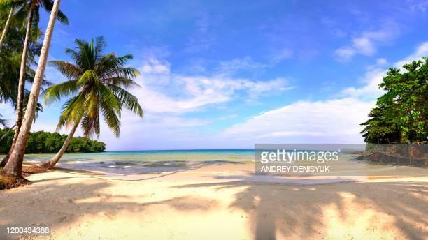 tropical paradise beach palm tree. nature. morning. luxury - tropical tree stockfoto's en -beelden