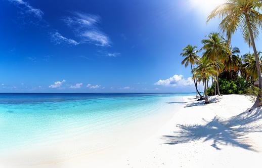 Tropical paradise beach 1145297304