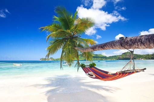 tropical paradise beach 475903022