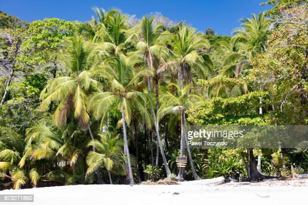 tropical paradise in playa montezuma on nicoya peninsula, costa rica - península de nicoya fotografías e imágenes de stock