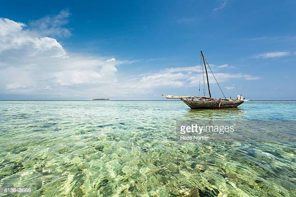 tropical paradise in zanzibar, tanzania. - zanzibar stock photos and pictures