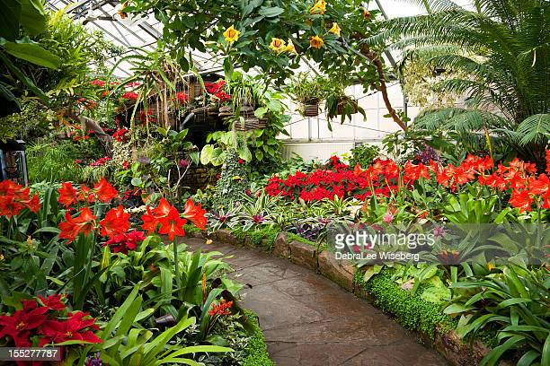 tropical paradise - amaryllis stock pictures, royalty-free photos & images