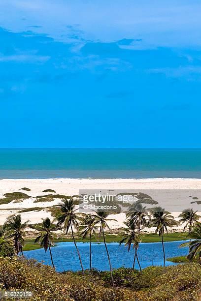 tropical paradise - crmacedonio imagens e fotografias de stock