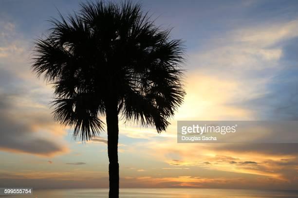 tropical paradise, sarasota, florida, usa - lee county florida stock photos and pictures