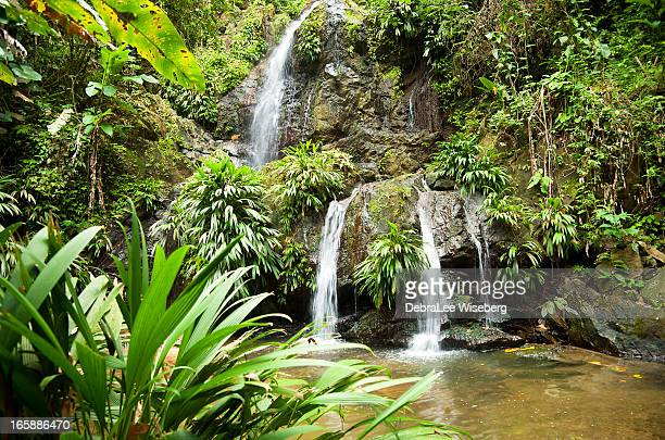 tropical paradise series - tobago stock pictures, royalty-free photos & images