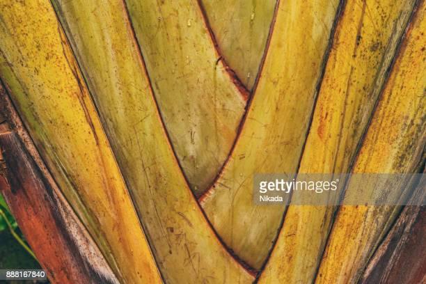 Tropische Pflanze, Brasilien