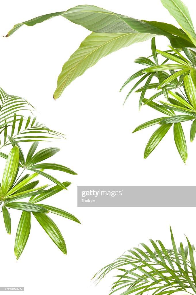 XXL piante tropicali frame : Foto stock
