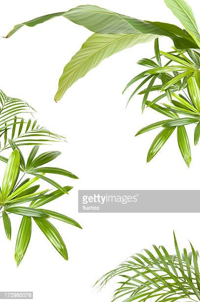 xxl tropical plant frame - palm tree stock pictures, royalty-free photos & images