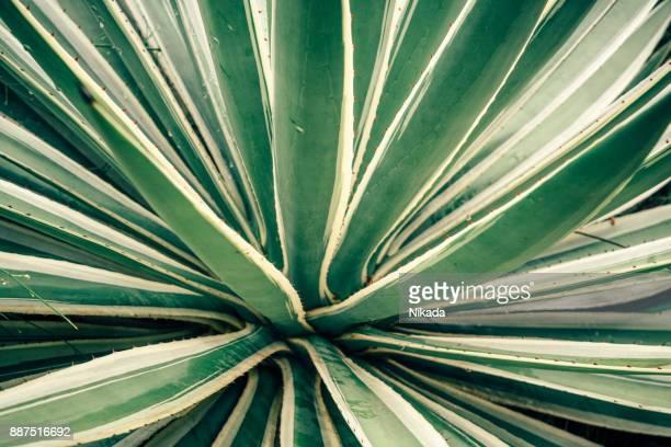 Tropische Pflanzen, Brasilien
