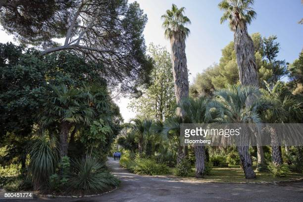 Tropical plants grown in the botanical gardens at the Villa Les Cedres a 187yearold000squarefoot 14bedroom mansion set on 35 acres in...