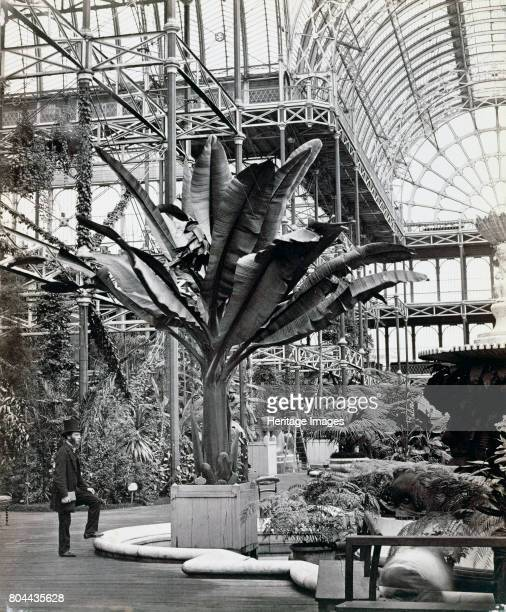 Tropical plants in the Egyptian Room Crystal Palace Sydenham London 1854 Designed by Joseph Paxton the Crystal Palace was a prefabricated cast iron...