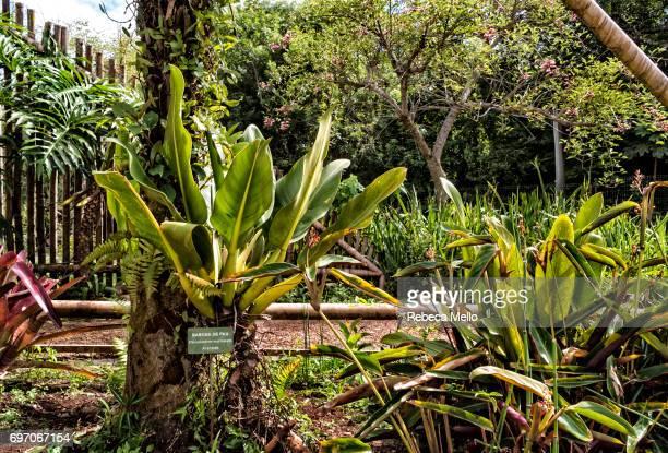 Tropical plants the Botanical Garden, Curitiba, Brazil
