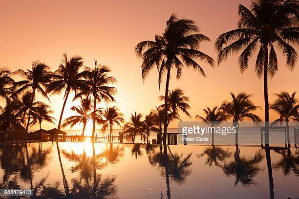 tropical pool and beach at sunset - playa del carmen fotografías e imágenes de stock