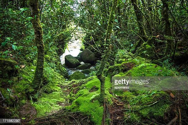 selva tropical en auyantepuy de mesa a las montañas - la gran sabana fotografías e imágenes de stock