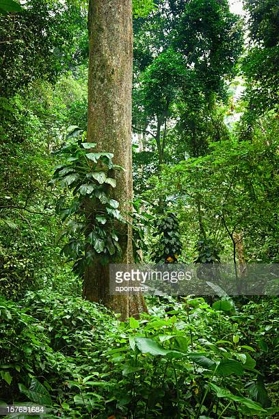 Tropical rain forest at Henry Pittier National Park, Venezuela
