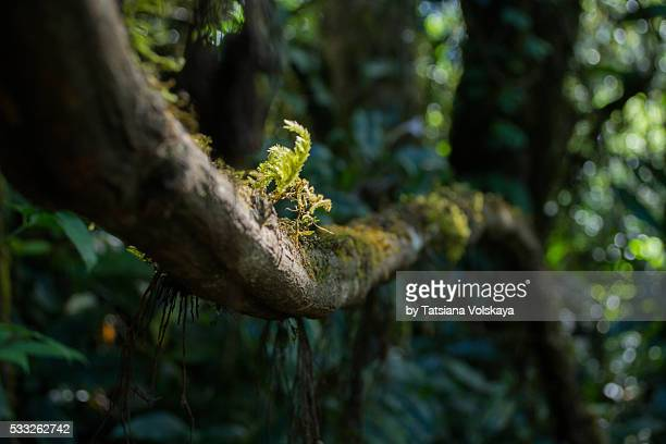 Tropical rain forest of Thailand. Macro photo branch with moss and roots, blurred focus