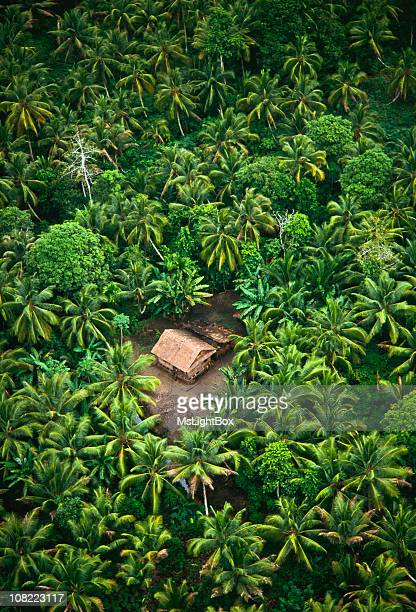 tropical rain forest & pam trees. - hut stock pictures, royalty-free photos & images