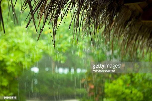 tropical rain - monsoon stock pictures, royalty-free photos & images