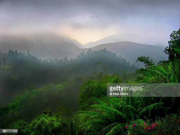 tropical rain - jamaica stock pictures, royalty-free photos & images